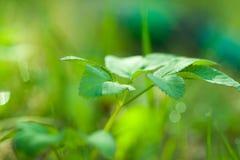 Предпосылка eco зеленого растения Стоковая Фотография RF