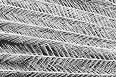 предпосылка feathery стоковые изображения rf
