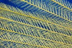 предпосылка feathery стоковая фотография rf