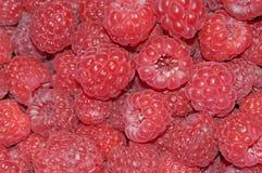 предпосылка fruity Стоковое Фото