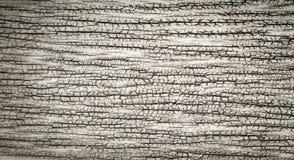 Предпосылка Grunge старая деревянная Стоковая Фотография RF