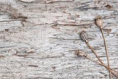 Предпосылка Grunge с сухими заводами на старой древесине Стоковые Изображения RF
