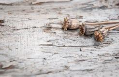 Предпосылка Grunge с сухими заводами на старой древесине Стоковая Фотография