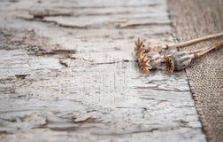Предпосылка Grunge с сухими заводами на старых древесине и дерюге Стоковые Фото