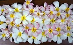 Предпосылка Plumeria Стоковая Фотография RF