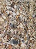 Предпосылка seashell Seashore Стоковые Изображения RF
