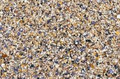 Предпосылка Seashells Много раковин моря на backgrou лета пляжа стоковая фотография