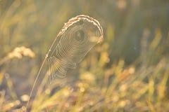 Предпосылка Spiderweb Стоковые Фотографии RF