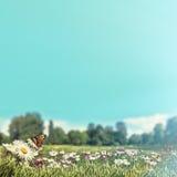 Предпосылки весны красоты с цветками маргаритки Стоковые Фото