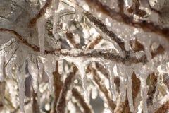 Предпосылки ветвей картины льда сосулек Стоковые Фотографии RF