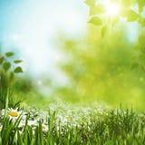 Предпосылки лета сезонные Стоковое фото RF