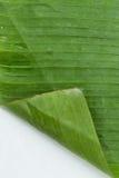 предпосылки лист банана Стоковое Изображение RF