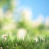 Предпосылки красоты сезонные Стоковая Фотография