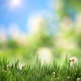 Предпосылки красоты сезонные Стоковые Изображения RF