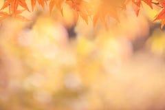 Предпосылки осени абстрактные Стоковое Фото