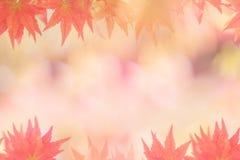 Предпосылки осени [мягкий фокус] Стоковое Изображение RF