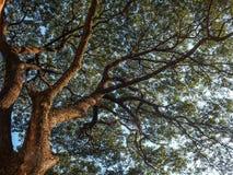 Предпосылки солнечного света древесной зелени природы Стоковые Фотографии RF