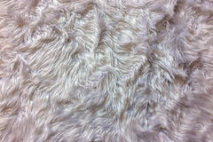 Предпосылки текстура шерстей, крупный план естественной мягкой белой животной пушистой текстуры предпосылки меха для роскошного м Стоковые Изображения RF