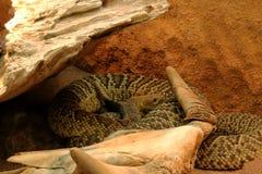 Предпосылки черепа косточки змейки смерти змейки изолированная белизна каркасной головной каркасной животная черная Стоковые Фотографии RF