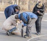 Предприниматели собак продемонстрировали на собаке выставки Стоковое Изображение
