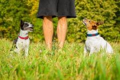 Предприниматель с собаками стоковые изображения rf