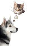 представлять собаки кота Стоковое Фото