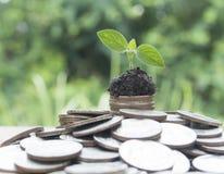 представьте счет рост зеленого цвета травы доллара растущий 100 дег одной Стоковое фото RF