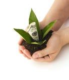 представьте счет рост зеленого цвета травы доллара растущий 100 дег одной Стоковое Изображение