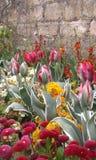Представление-буфф весны Стоковые Изображения RF