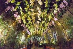 Представление-буфф орхидеи, сады заливом, Сингапур Стоковое Изображение