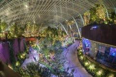 Представление-буфф орхидеи, сады заливом, Сингапур Стоковое Изображение RF