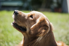 Представление собаки Стоковое Изображение RF
