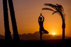Представление Vrikshasana йоги в тропическое положение Стоковые Фотографии RF