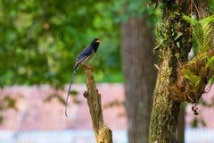 представленный счет голубой красный цвет magpie Стоковое Фото