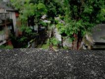 Представлять муравья на пограничной стене дома Стоковые Фото