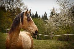 представлять лошадей на лугах горы зеленого цвета Стоковое Изображение