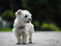 Представлять собаки Стоковое Изображение