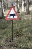 Предупреждение знака льва Стоковые Фото