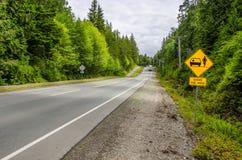 Предупредительный знак на прямой дороге леса Стоковая Фотография RF