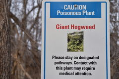 Предупредительный знак ядовитого завода Hogweed гиганта стоковое изображение