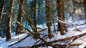 Предыдущая атмосфера около Brienzersee, Швейцария зимы Стоковое фото RF