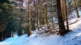 Предыдущая атмосфера около Brienzersee, Швейцария зимы Стоковые Фотографии RF