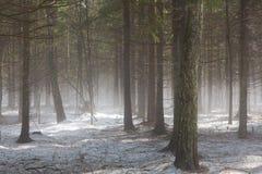 Предыдущая весна в лесе стоковые фото