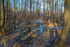 Предыдущая весна в потоке леса марш Стоковая Фотография RF