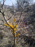 предыдущая весна гор Стоковая Фотография RF