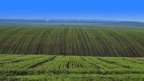 предыдущая весна зерна поля Стоковые Фото