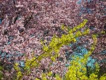 предыдущая весна цветков Стоковые Изображения RF