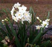 предыдущая весна Стоковая Фотография