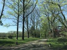 предыдущая весна Стоковые Фото