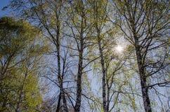 предыдущая весна Стоковая Фотография RF